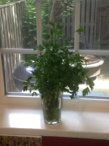 This is parsley from last Sunday--still looking fresh and pretty